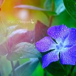 RW Photography profile image.