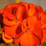 Bodhi Organic Garden Supply profile image.