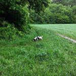 Paws To Run profile image.