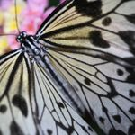 Monarch Images- Wendy Longlade photography profile image.