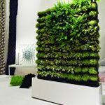 Green Life Designs profile image.