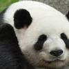 Weblinx Limited  profile image