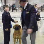 Kandoo Canines Begining Obedience and Conformation profile image.