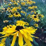Lone Oak Farm Flowers, LLC profile image.