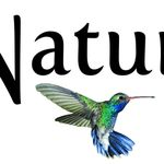 Nature's Envy Landscaping profile image.