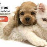 Little Victories Animal Rescue Shelter profile image.