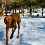 Elite Dog Dynasty LLC profile image.