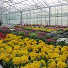 Daisy Rose gardeners