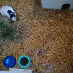 Dotties Small Animal Boarding and House Sitting profile image.