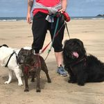 Erdington Dog Walking & Small Pet Sitting Service profile image.