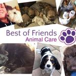 Best of Friends Animal Care profile image.