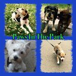 Paws In The Park       Dog Walking Services profile image.
