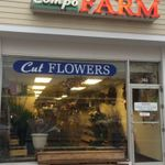 Compo Farm Flowers profile image.