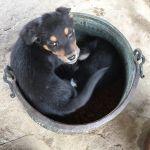 LANDELA DOGS profile image.