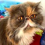 Uptown Girls Pet Care Services, LLC profile image.