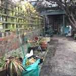 Roots & Things Garden Services. profile image.