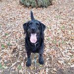 The doggy squad profile image.