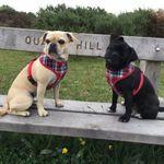 Gemma's Dog Walking & Pet Care profile image.
