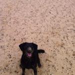 Maries dog walking profile image.