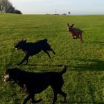 Ball & Biscuit Professional Pet Services profile image.
