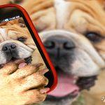 Big Dog Mobile Apps profile image.