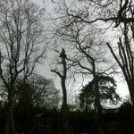 All Trees Surrey profile image.