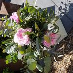 Pinks Flowers profile image.