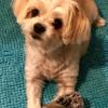 Walk N Roll Doggie profile image