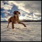 The Balanced Dog profile image.