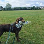 Woodland Walkies Pet Care profile image.