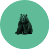Northern Bear profile image
