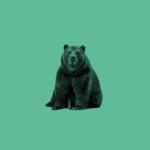 Northern Bear profile image.
