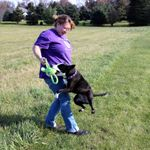 Just like MaGic - Positive dog training and equine services profile image.