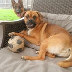 Happy Tails Dog Sitting - Your dog(s)home away from home profile image.