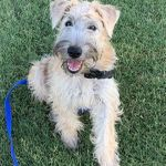 Kathrine Breeden - Be Kind To Dogs profile image.