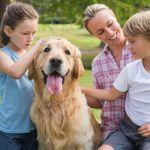 Triumphant Canine Dog Training profile image.