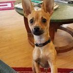 Az. Canine Concierge profile image.