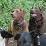 Happi Days Dog Day Care profile image.