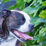 Payne Photography profile image.
