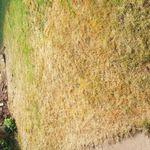 Pro fence & landscapes profile image.