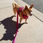 A Happier Home Dog Training profile image.