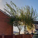 Evergreen Tree Services profile image.