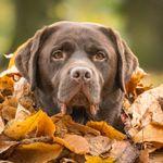 Nigel Kirby Photography profile image.