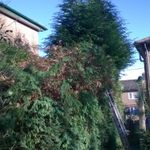 A G D J BROWN FORESTRY CONTRACTORS profile image.