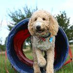 Enve Canine Services profile image.