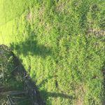 T & H Gardening profile image.