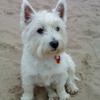Fresh Ayr Walkies  profile image