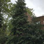 TT Treecare and landscape services profile image.