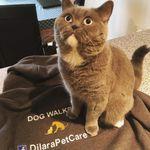 Dilara Pet Care- Broxbourne profile image.
