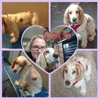 Dizzy Dogs Grooming and pet care